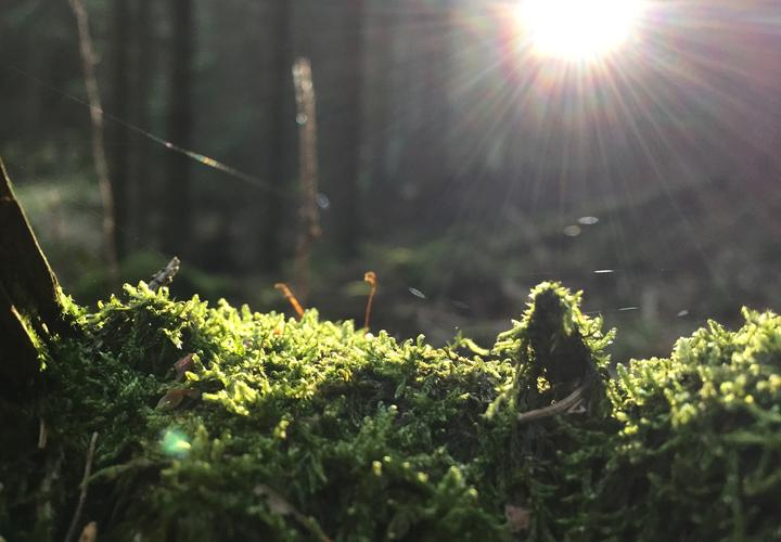 Moss and sunbeams